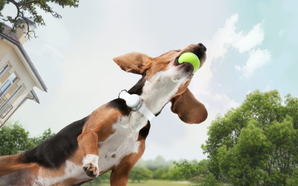 inteligentný obojok pre psov